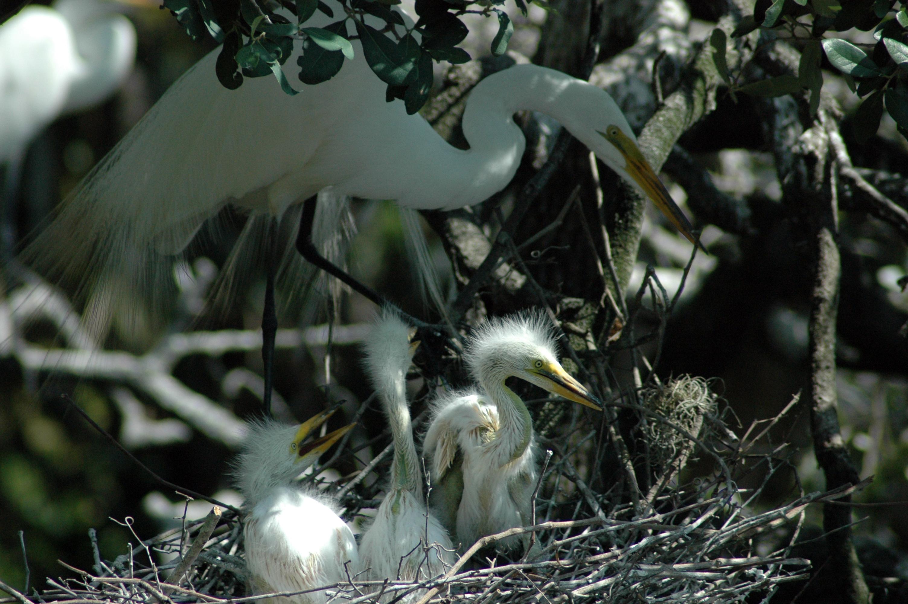 2006, birds