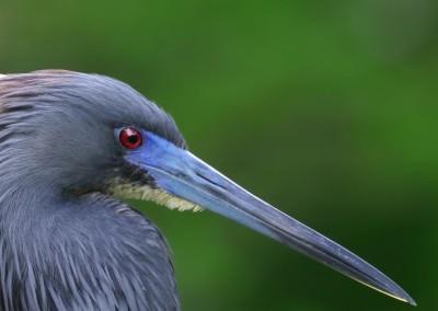 Gulf Coast Birding