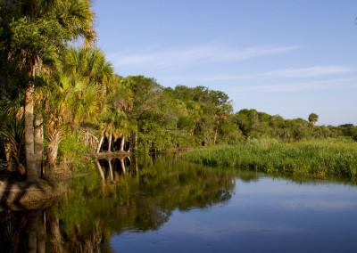 Wild Myakka River