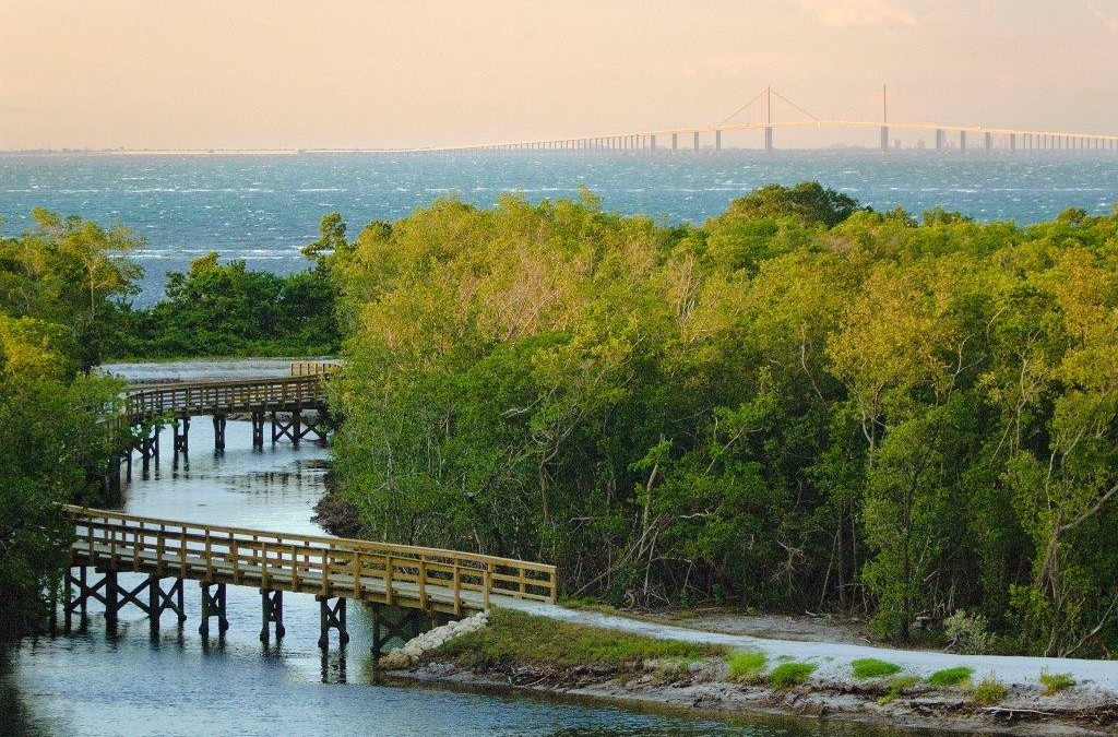 Manatee River of Time