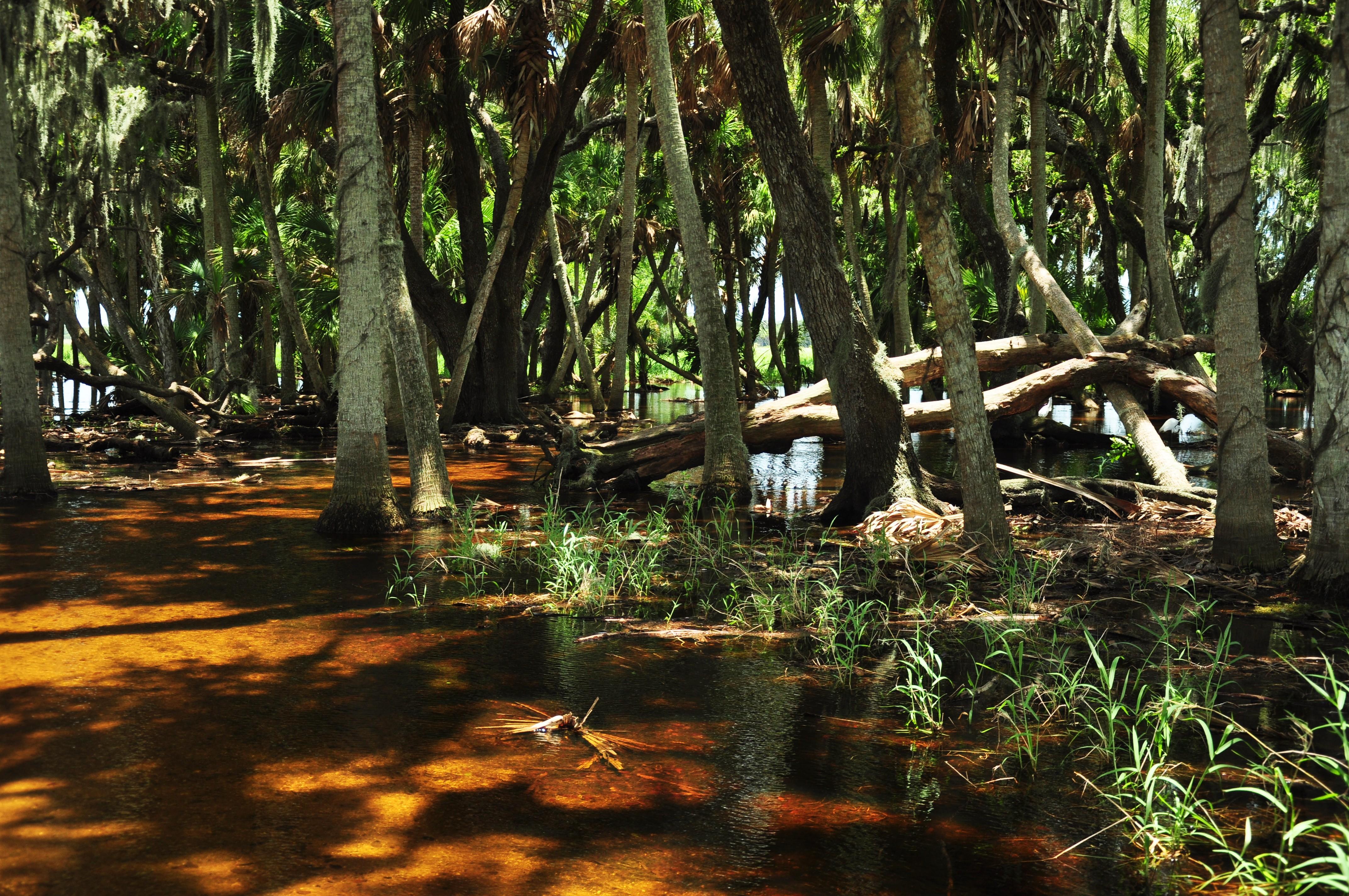 187 Wild Myakka River